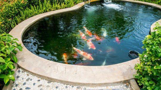 entretien d'un bassin en dur
